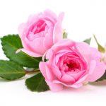 Magia de amor con rosas
