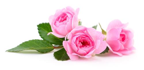 Magia de amor con rosas efectivo